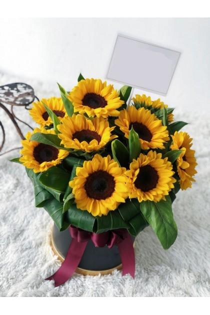 BXF008 Sunflower Box