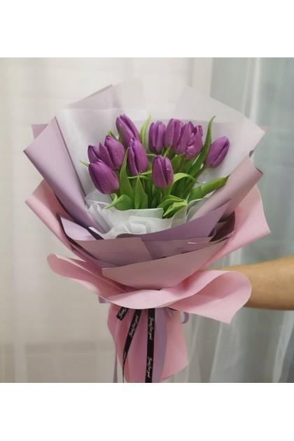 HB227 Purple Tulip